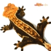 halloween crested gecko price